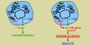 L'Ossido Nitrico, la Molecola della Vita di Daniele Guarrera