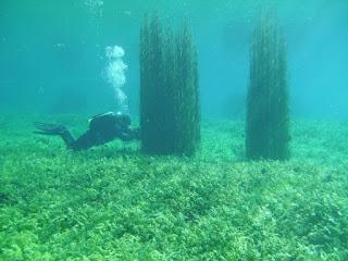 Blushark a Capodacqua by GRAVITY ZERO Diving TEAM