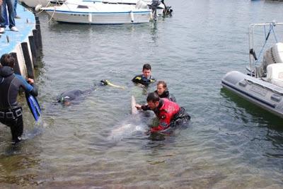 Oscar Alegre - Calpe - recupero squalo morto by GRAVITY ZERO Diving TEAM